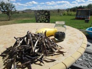 Shelling beans in my backyard